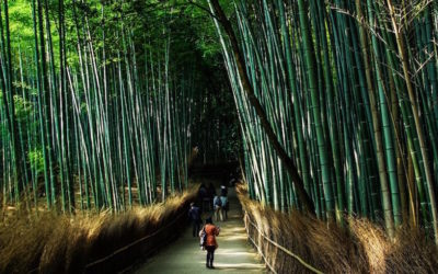 What's So Great About Bamboo?